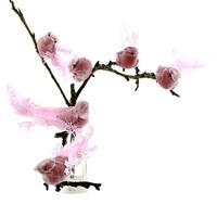 6 Stück Paradies Vögel mit Clip in pink, Federn und Samtkörper !!!