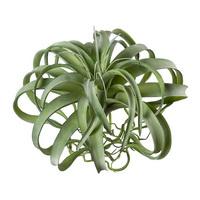 Tillandsie Pflanze GIGANTE grün, Kunststoff, outdoor H30/11cm Ø 40cm !