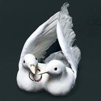 Taubenpaar mit Ringen, 32cm GIGANTE, Hochzeit / Nice Price !!!