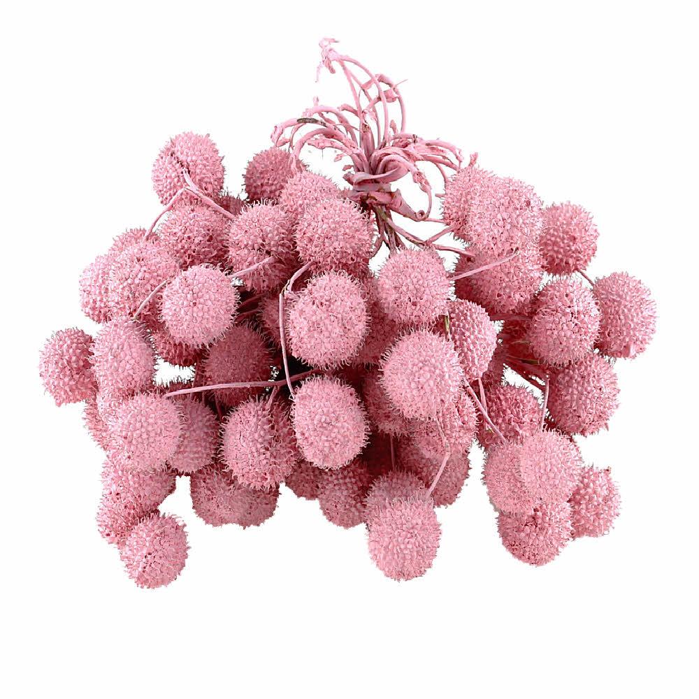 Platanen Früchte im Bund, Zweige mit bis zu 5 Bällen !!! pink/rosa