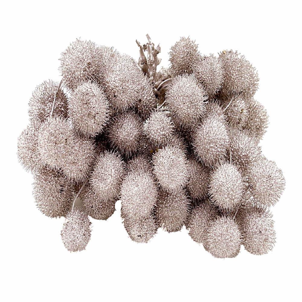 Platanen Früchte im Bund, Zweige mit bis zu 5 Bällen !!! champagner